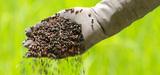 Nitrates : le ministère de l'Agriculture propose de combiner les gains écologiques et économiques