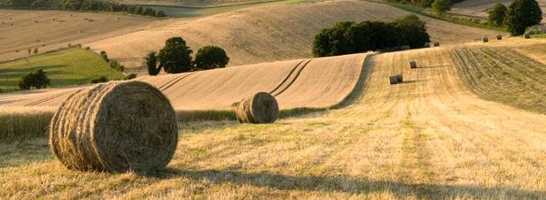 Agriculture : les grandes lignes du projet de loi d'avenir