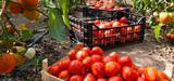 La sécurité sanitaire des aliments remise en cause par les résidus de pesticides