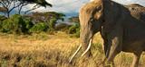 Trafic d'espèces protégées : la garde des Sceaux prône la fermeté