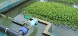 Assainissement : que faire des sables souillés retirés des massifs filtrants ?