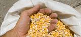 OGM : le gouvernement maintient son opposition malgré le vote des sénateurs