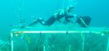 Acidification des océans : l'expérience eFoce débutera en mars