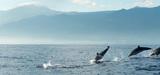 Directive études d'impacts : la pollution sonore sous-marine prise en compte