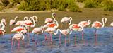 Le projet de loi sur la biodiversité est dévoilé