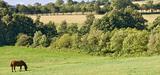 Comment préserver la biodiversité sur les terres agricoles ?
