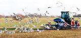 Inattendu plaidoyer de la FNSEA pour la biodiversité