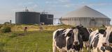 Méthanisation : les unités à la ferme fonctionnent rarement de façon optimale