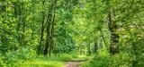 Gestion durable des forêts : des fonctions écologiques à valoriser