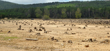 Les agrocarburants utilisés en Europe accélèrent bel et bien la déforestation