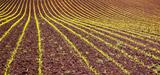Culture des OGM : un accord européen qui ne fait pas l'unanimité