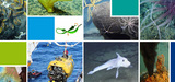 Ressources minérales marines profondes : leur exploitation détruirait irrémédiablement les habitats