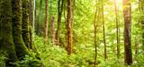 Restructuration de la filière forêt-bois française : l'Allemagne comme modèle?
