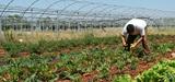Le Sénat adopte définitivement le projet de loi d'avenir agricole