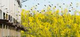 Insecticides et variétés tolérantes aux herbicides : les précisions de Stéphane Le Foll