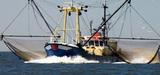 Les écosystèmes marins victimes de décennies de surpêche
