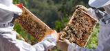 Production apicole française : la saison 2014 en berne