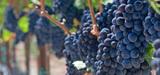 Valorisation des résidus de vinification : les distillateurs en colère