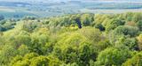 La crise de l'ONF aura-t-elle raison du régime forestier ?