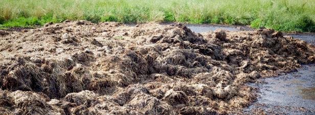 Les composts urbains sont bons pour les sols et les cultures