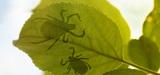 La protection de la biodiversité, un outil de santé publique ?