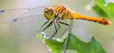 L'Agence française pour la biodiversité est en ordre de marche