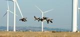 Convention de Bonn : réduire les risques liés aux énergies renouvelables
