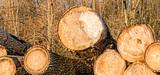 Les exportations de bois français vers la Chine avivent les tensions