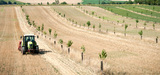Agroforesterie : la méconnaissance de cette pratique reste un frein à son développement
