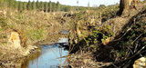 Sivens, un projet de nature à empêcher le bon état écologique du cours d'eau, selon l'UE