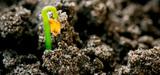 Mobilisation pour les sols, supports de toute vie sur Terre