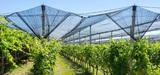 Phytosanitaires : les certificats d'économie seront testés pendant cinq ans
