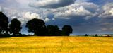 Le secteur agricole au cœur des négociations climatiques