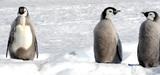 Un tiers des espèces en danger dans les Terres australes et antarctiques