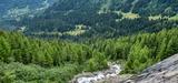 Les forêts françaises, atouts dans la régulation du climat