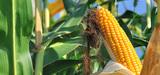 Importations d'OGM : l'Europe propose un nouveau cadre juridique
