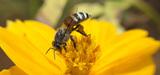 Les abeilles sauvages, sujet d'un plan ministériel
