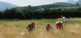 Aménagements paysagers : les végétaux locaux bientôt à leur juste place