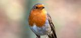 Biodiversité : l'avenir incertain des directives Oiseaux et Habitats