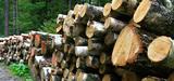 L'Ademe pointe l'impact du développement du bois énergie sur le bilan GES de la forêt