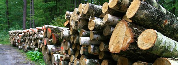 L'Ademe pointe l'impact du développement du bois énergie sur le bilan carbone de la forêt