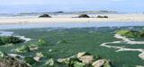 Plan de lutte contre les algues vertes en Bretagne : un bilan mitigé