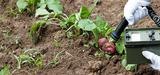 Contamination alimentaire en cas d'accident nucléaire : la révision des seuils sème le doute