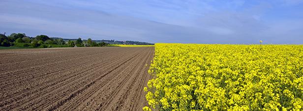 Agrocarburants : les règles européennes sont fixées