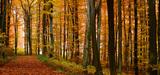 La forêt française manque de plantations et de financements