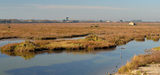Biodiversité : l'avenir des directives Oiseaux et Habitats pourrait s'éclaircir