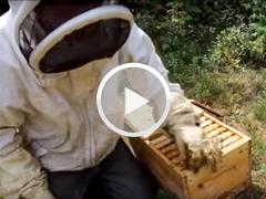 Impact changement climatique apiculture