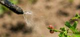 Pesticides : un rapport officiel pointe l'échec du dispositif Certiphyto