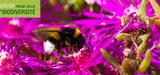 Le Sénat élargit les missions de l'Agence française pour la biodiversité