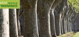 Loi biodiversité : les sénateurs renforcent la protection des alignements d'arbres